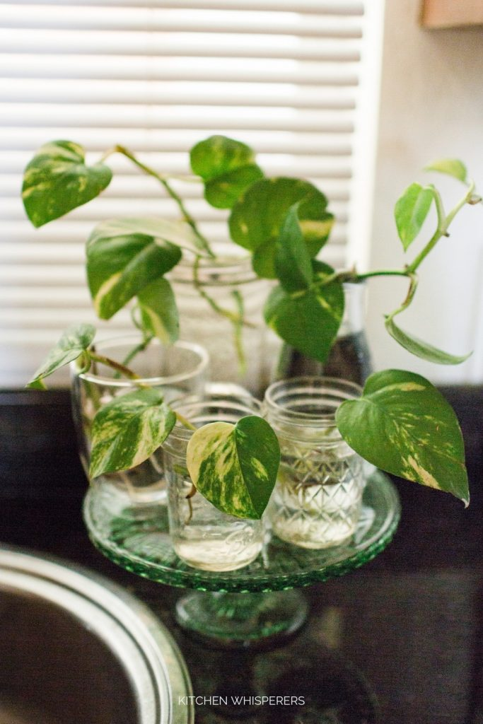How to Propagate Plants by Using Cuttings Step by step