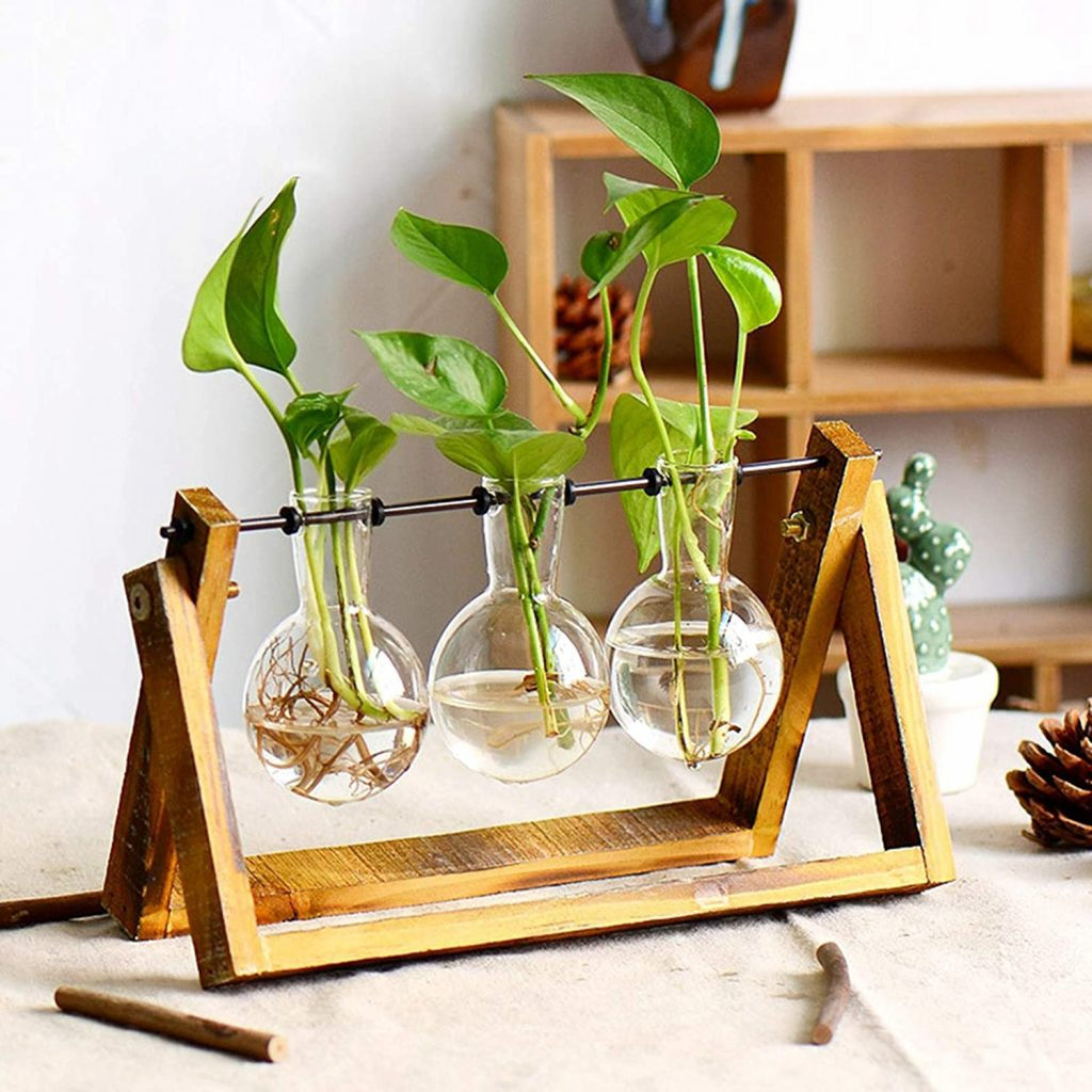Plant propagation glass with Wooden Stand